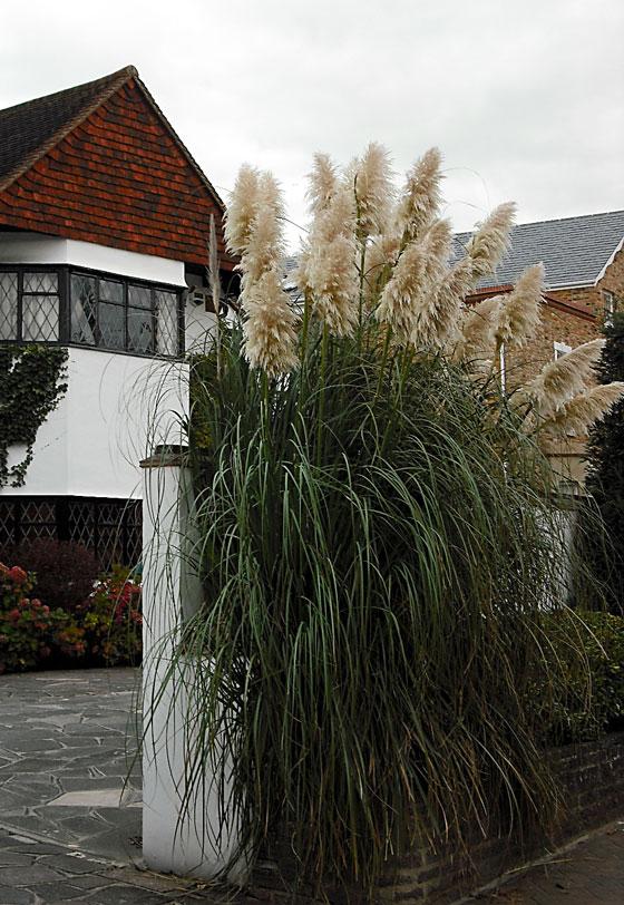 A house in Chislehurst