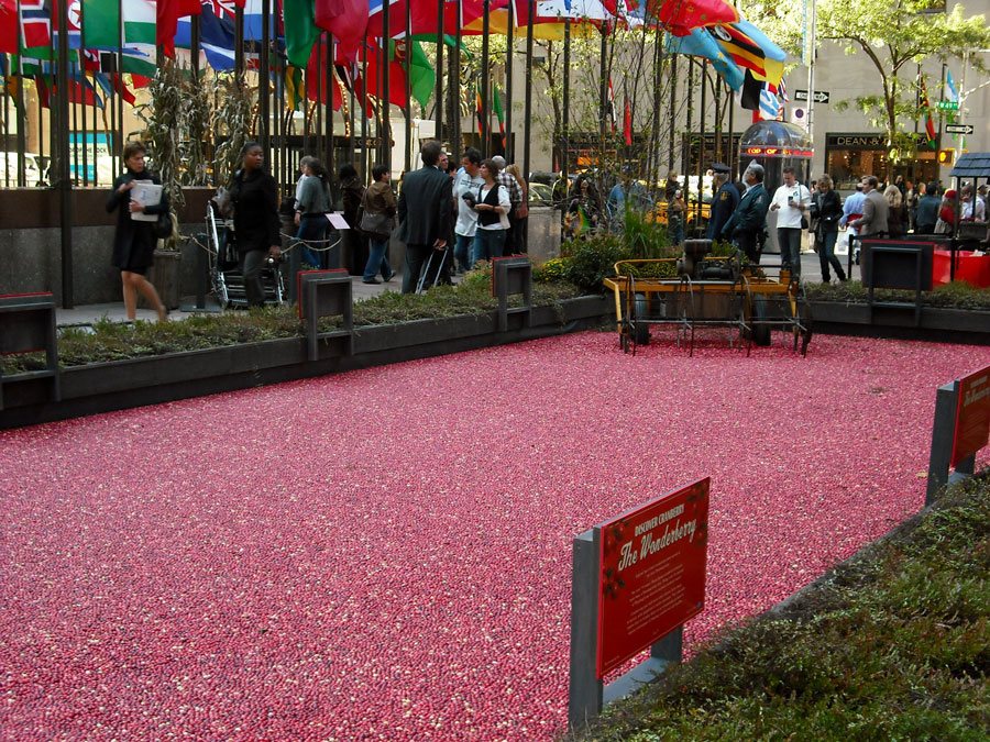 Cranberry bog at Rockefeller Plaza