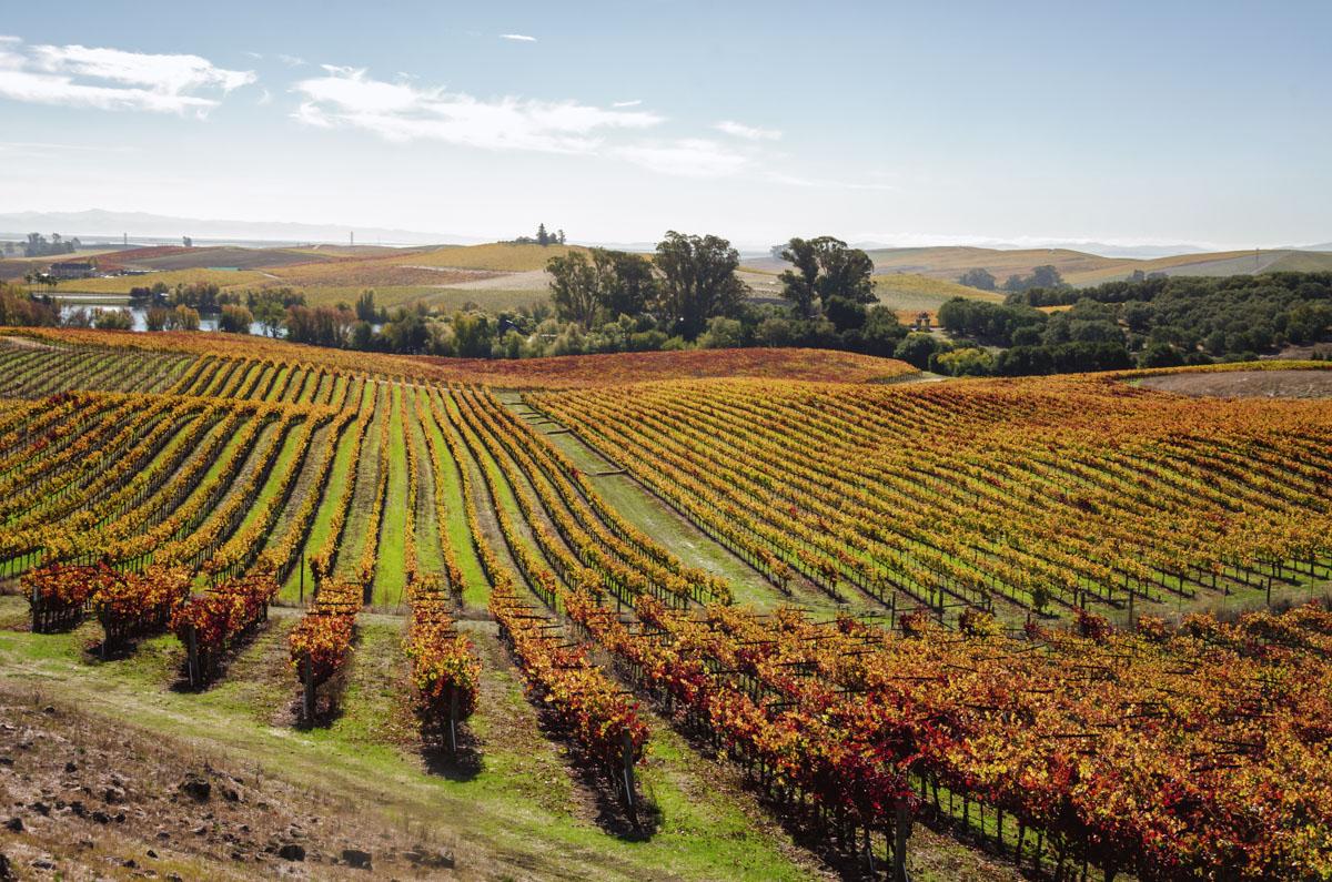 Artesa Winery, Napa Valley