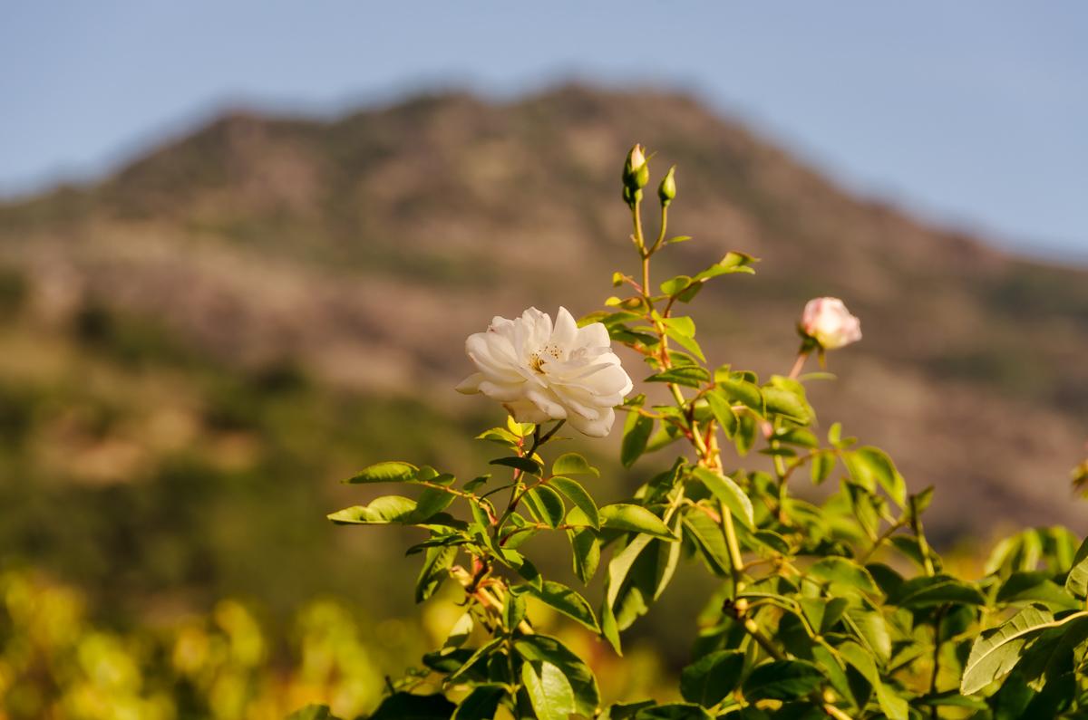 Cliff Lede Vineyards, Napa Valley